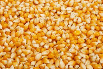 Nourriture agricole
